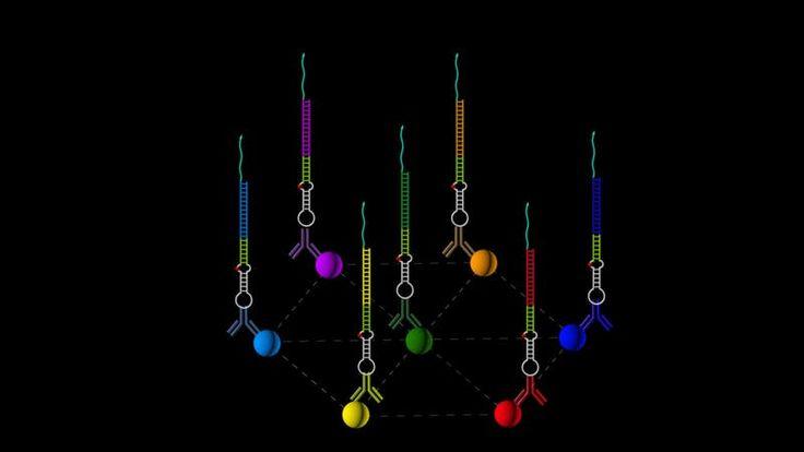 "High-fidelity recording of molecular geometry with DNA ""nanoscopy"""