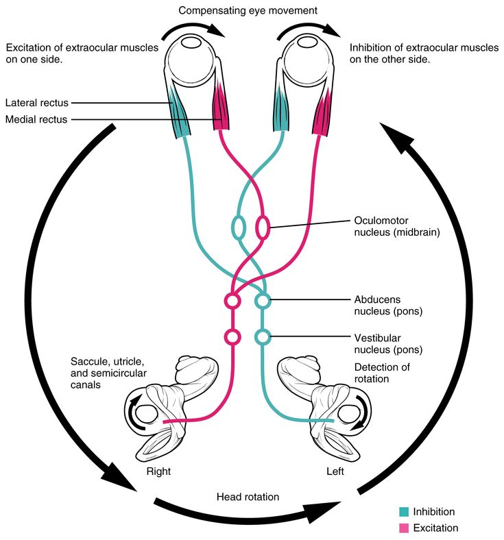 The Vestibular System and EOMs - Part 2