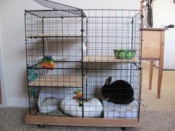 how to build an indoor squirrel cage