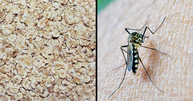 Smør havregrød på dine myggestik – den uventede effekt kommer til at overraske dig