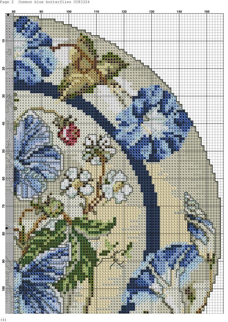 common blue butterflies-4