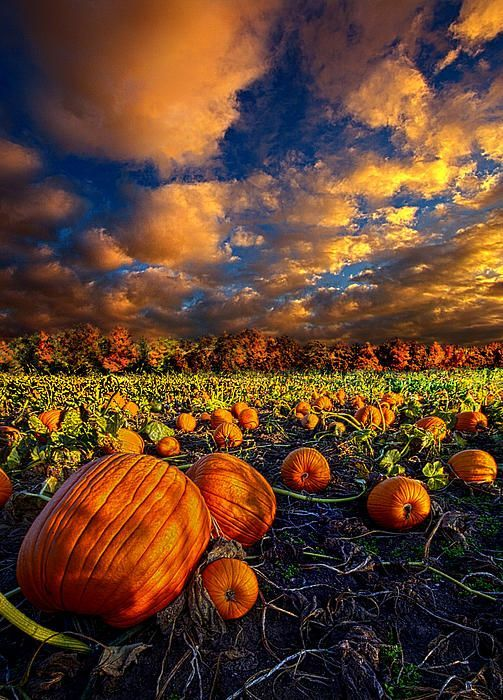 """Pumpkin Crossing"""