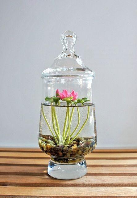 Freshwater Terrarium Flower Succulent Plants - Table Centerpiece Plants
