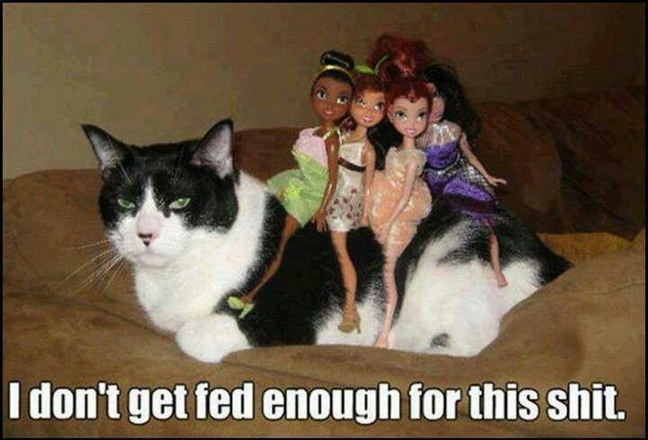 Cat humor. Hilarious.