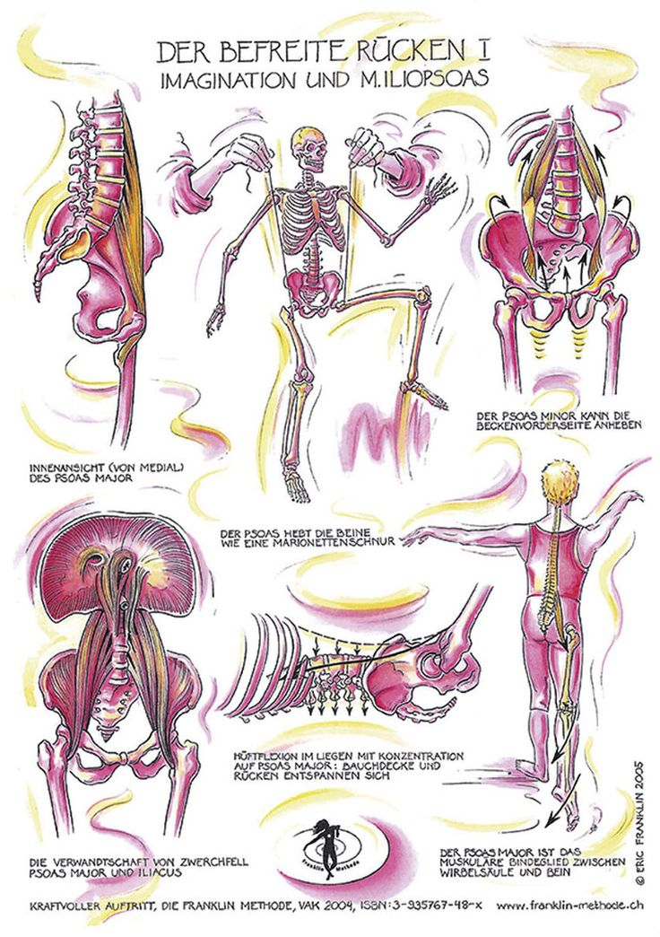 44 best Anatomie images on Pinterest   Anatomy, Franklin method and ...