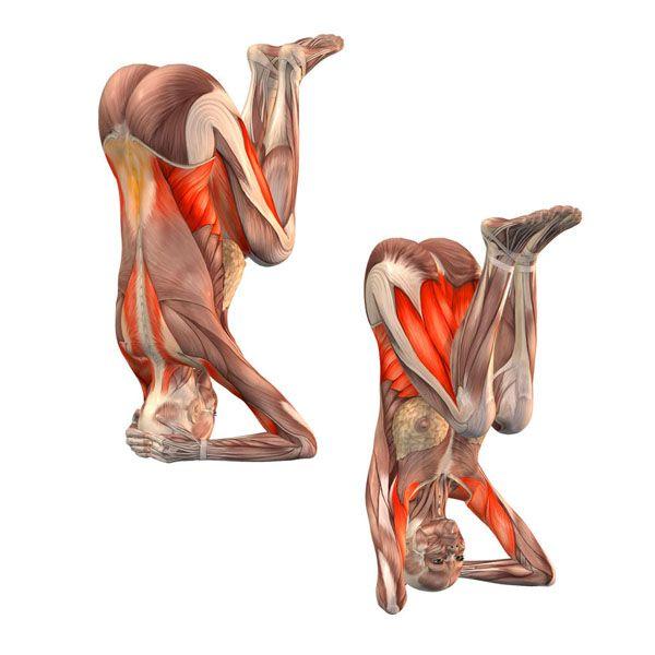 181 best Yoga Asanas images on Pinterest | Yoga anatomy, Skeleton ...