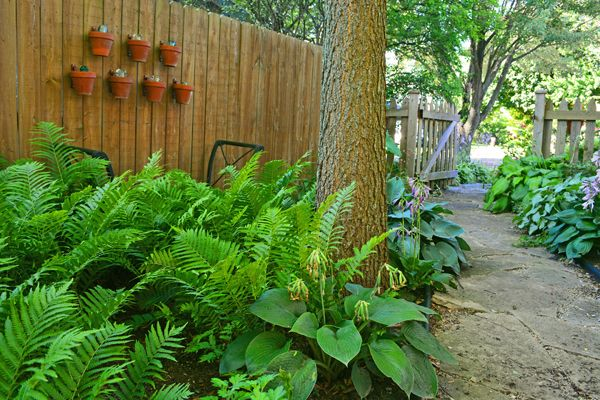 Best 25+ Side yards ideas on Pinterest | Side yard ...