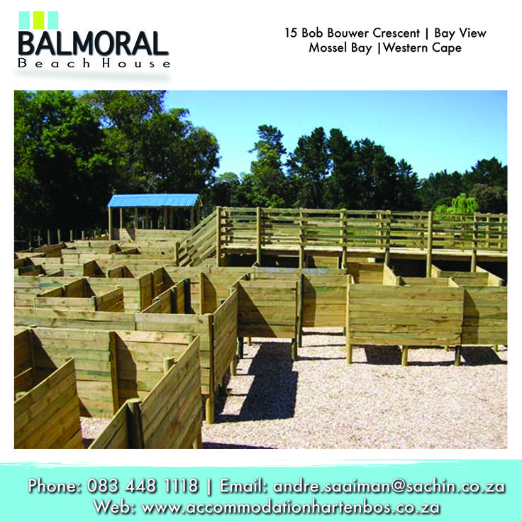 3D MAZE in Plett. A maze designed to be a challenging and enjoyable life size puzzle. The task is to find your way to the four corners.The easier route takes 30-45 minutes, the brave can try The Challenge and should allow 45-60 minutes. This maze is a lot of fun and is suited to people of all ages!  #Plett #Activities #Maze