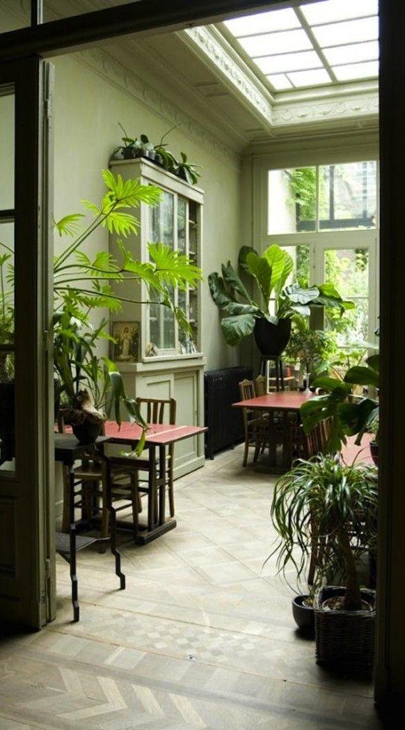 Verrière au plafond et accumulation de plantes vertes