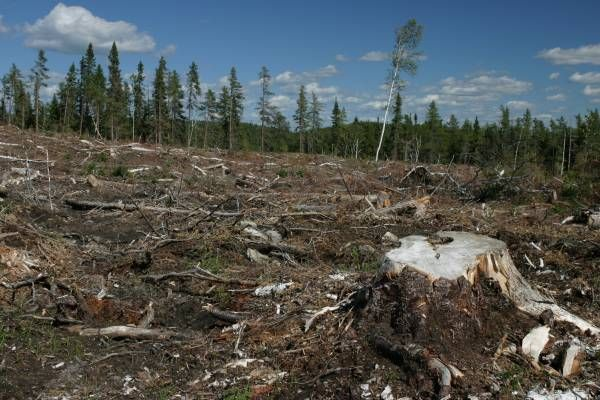 Deforestation has disrupted the biodiversity in the forest. Countless materials unclassified drug has permanently lost before we know what the benefits from it. One thousand plants, rare animals and insects have disappeared because of deforestation.