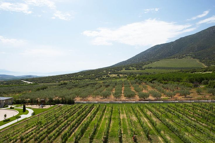 このワイナリーとぶどう畑はテッサロニキの東100キロの位置にあって、 カヴァラから50キロの距離にあります。ワイナリーの背後には雄大なパンゲオン山地があり、何世紀も変わらずこの地の歴史を見続けています。