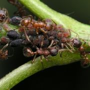 Vinegar to Kill Carpenter Ants | eHow