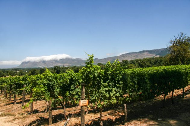 Vineyards.  http://citysightseeing-blog.co.za/2015/03/21/historical-groot-constantia-cape-town/