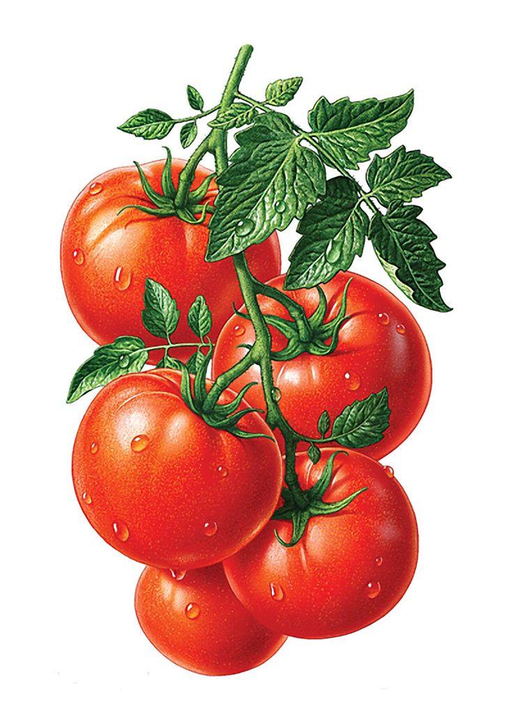 190 best Verduras e legumes images on Pinterest ...
