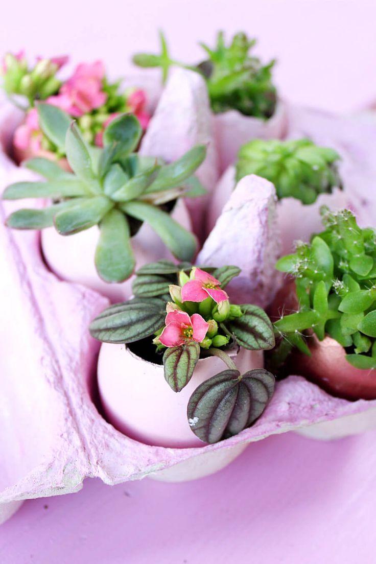 Ostereier lassen sich super als kleine Pflanzgefäße verwenden und mit Mini-Sukkulenten bepflanzen. Wie's geht, zeige ich dir in dieser DIY Anleitung!