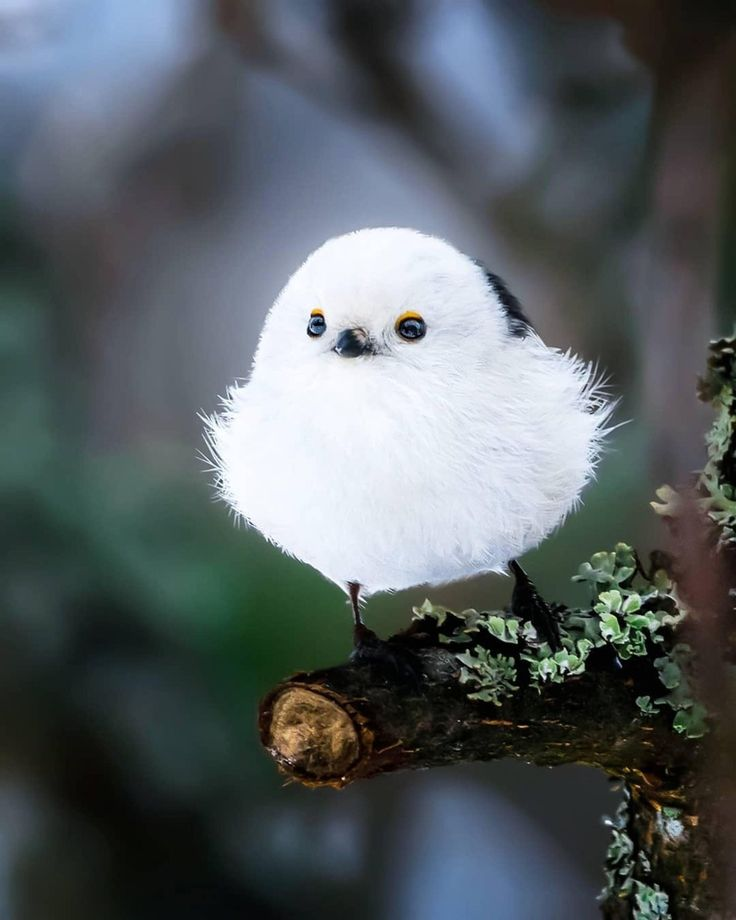 достаточно знать картинки классных птиц женщины считаются одними