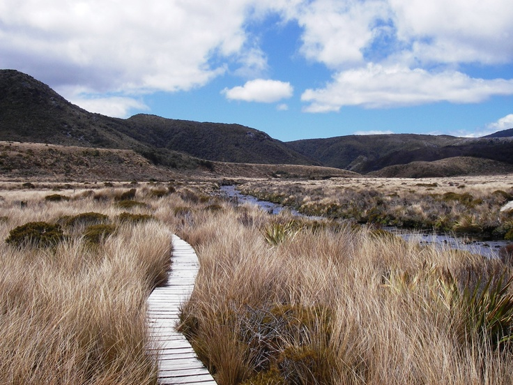 The track on the Heaphy Track in New Zealand.