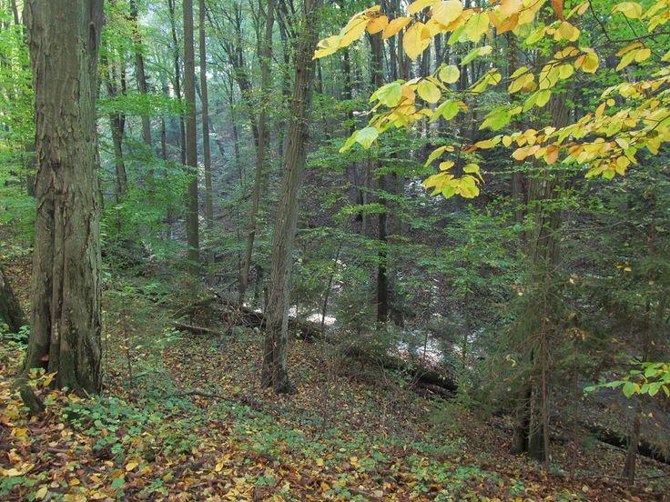 Słowiczy Wąwóz na drodze szlaku pieszego do Szestna. Znajduje się w nim Diabelski Kamień. Kamień pokryty jest częściowo mchem i leży na wzgórzu powyżej miejsca, gdzie łączą się dwa strumienie.  www.it.mragowo.pl