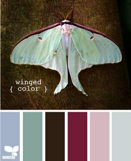 Gorgeous colors!: Colors Combos, Design Seeds, Colors Bedrooms, Pretty Colors, Colors Design, Colors Palettes, Colors Schemes, Wings Colors, Bedrooms Decor