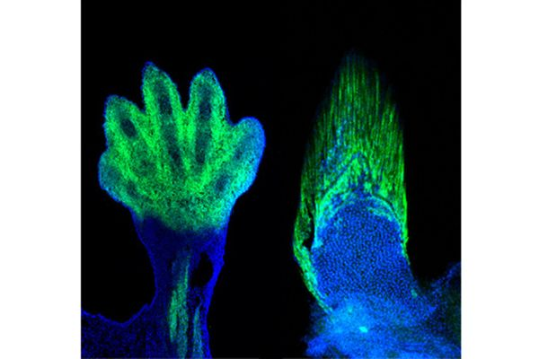 Did our fingers evolve from fish fins? The answer is: yes