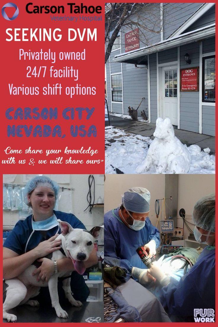 Dvm veterinarian carson tahoe veterinary hospital