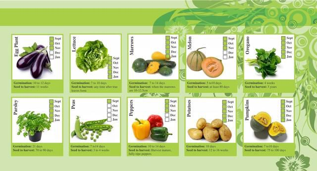 Image from for Vegetable garden designs south africa