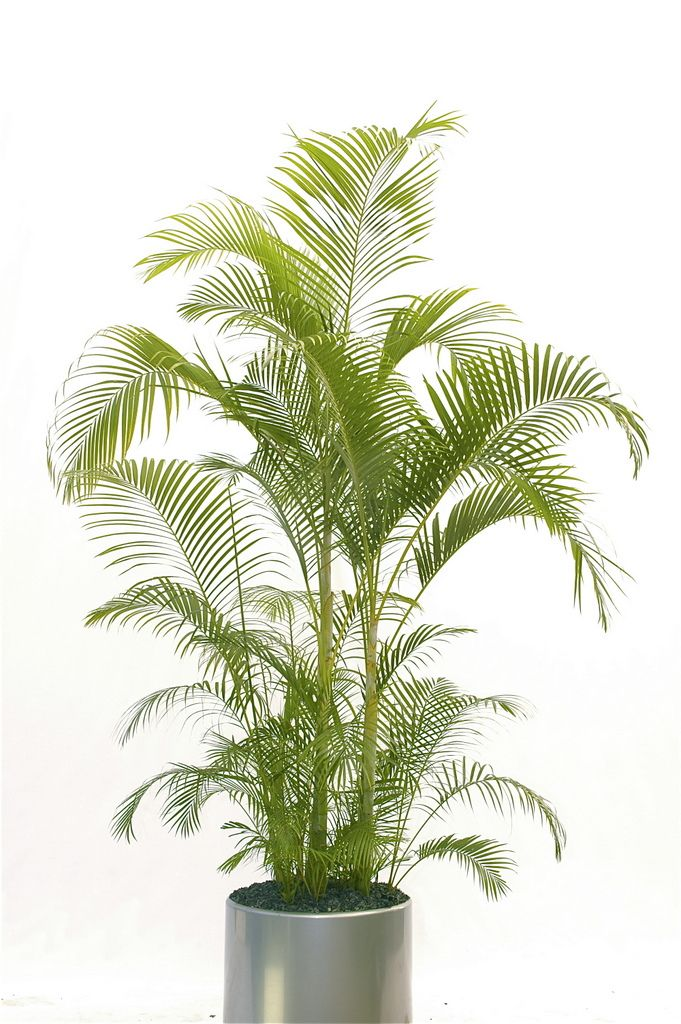 tropical office plants. although large indoor plants are characteristic of shopping malls u2013 or any similarly and commercial tropical office