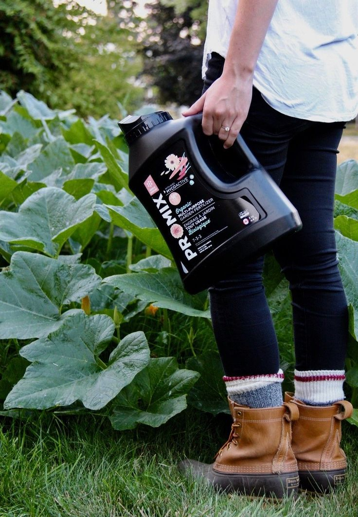 When is it going to be pumpkin everything season already!? Finding a natural fertilizer for pumpkin plants can be tricky. They\'re hungry! Choose an organic fertilizer and don\'t skimp on the homemade compost! #ad #pumpkins #organic #promix