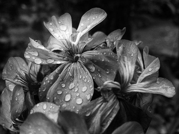 love me.  15.04.2016  #scl #peoplecreatives #picoftheday #photooftheday #thecoolmagazine #ftwotww #chile #lifeofadventure #nature #folk #blackandwhite #the1975 #macro #sony #otoño #autumn #rain
