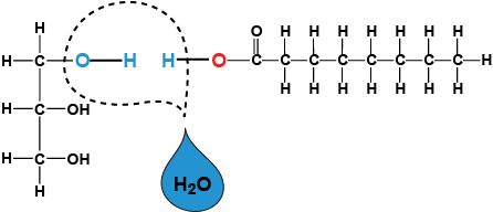 dehydration reaction - Google Search