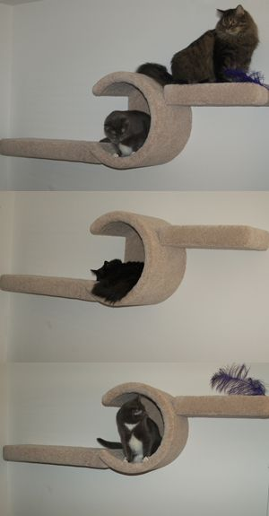 Wall cat furniture! ~ Enjoy everything about #cats with the latest Ozzi Cat Magazine! Get your copy here >> http://OzziCat.com.au/issues