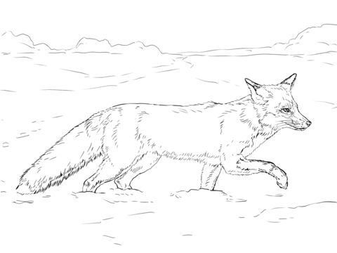 Red Fox Walking on Snow Coloring page from Red Fox