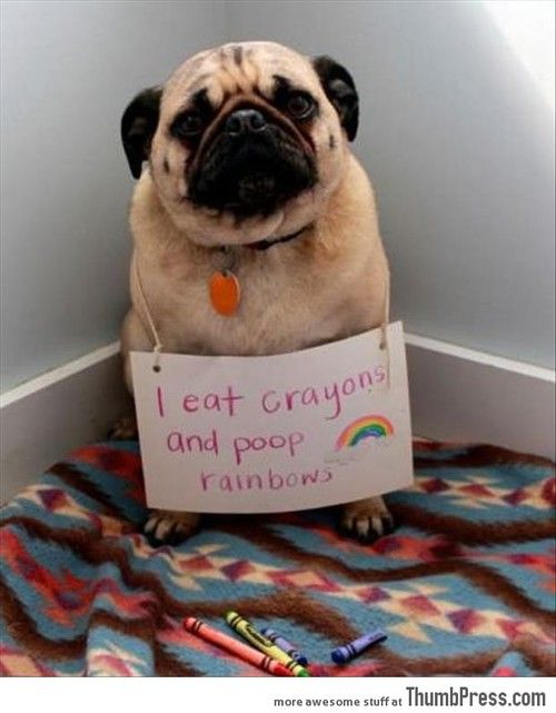 I eat Crayons  http://advice-animal.tumblr.com/  This hits home, I had to be sure to pick up all crayons asap, or Puggles would try to indulge.