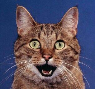 SeaNanners ( Adam Montoya )  CATS.