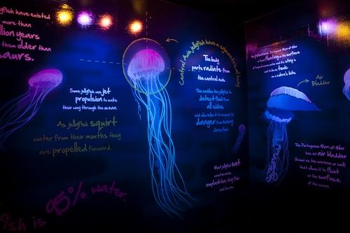 Black light jelly fish room kids 39 lounge pinterest for Tap tap fish light jellyfish
