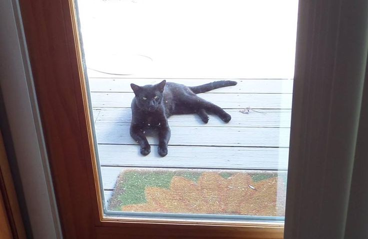 Cats for Adoption: Blackie Wants In