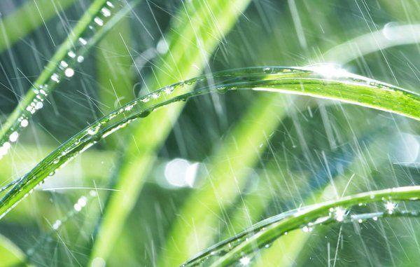 BEREGNER: Hvor meget regn falder der i min have?