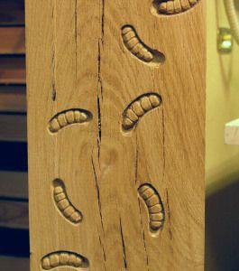 Woodworm Training
