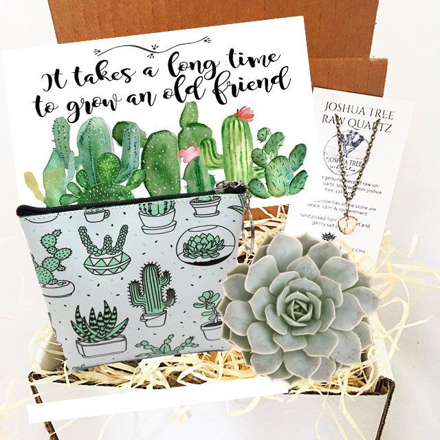 Birthday GiftI Ideas Birthday Gift For Best Friend Birthday Gift For Her Live Succulent gift box Birthday Gift Custom Birthday Gift