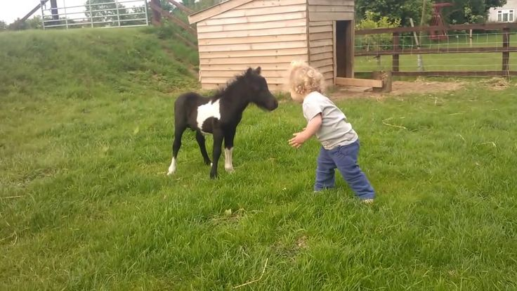 NEWBOM       FOAL      FRIENDS     WITH     CHILDREN