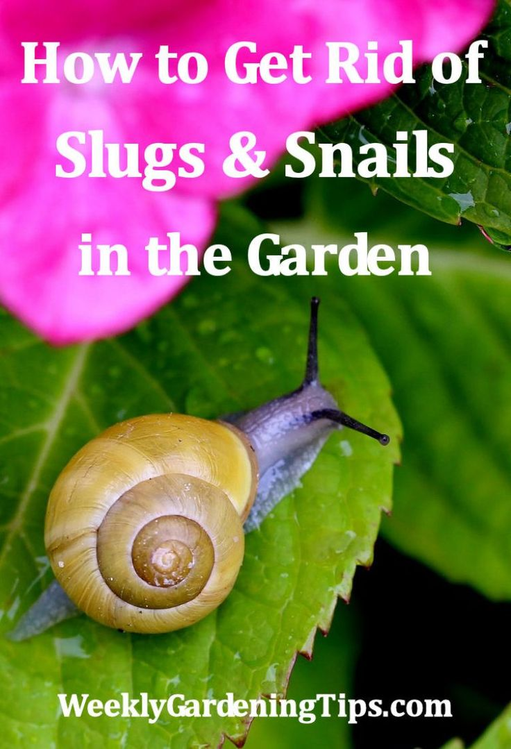 35 best organize seeds images on pinterest growing vegetables vegetable garden and vegetables for How to get rid of slugs in garden