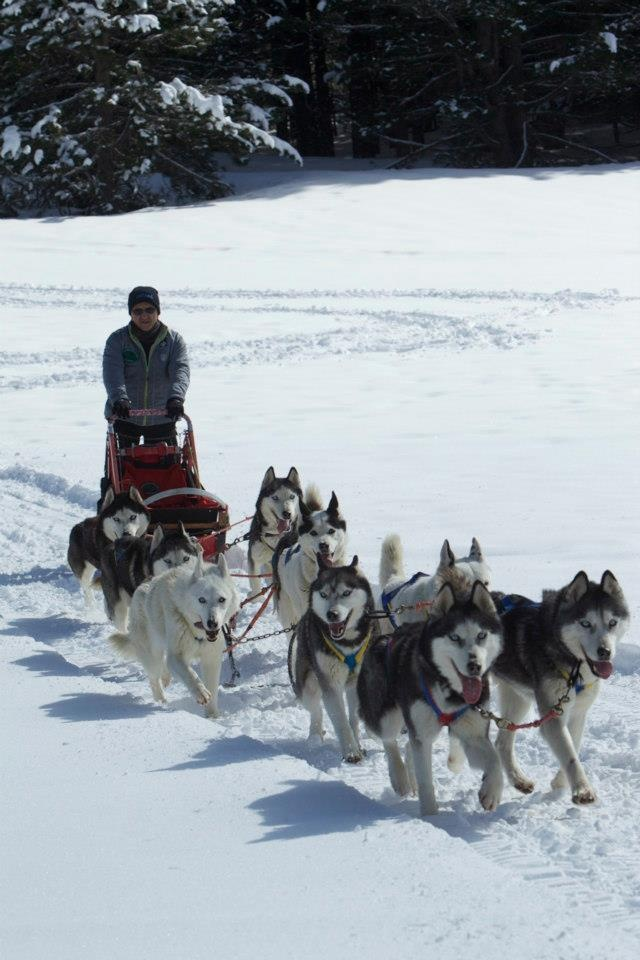 Dogs on the Snow 2013 - #Sila #Calabria