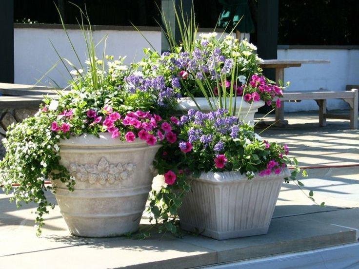 Delightful Fleur Exterieur En Pot #7: Fleur Du0027extérieur En Pot