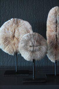 Wit Rond Stuk Koraal Op Voet -Luxury By Nature