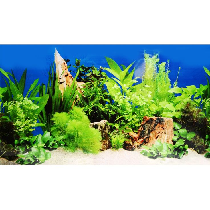 ==> [Free Shipping] Buy Best 15040CM Aquarium Fish Tank Beautiful Grass Sticker 2017 New Decoration High Definition Background Paper Fish Tank Sticker Online with LOWEST Price | 32818891179
