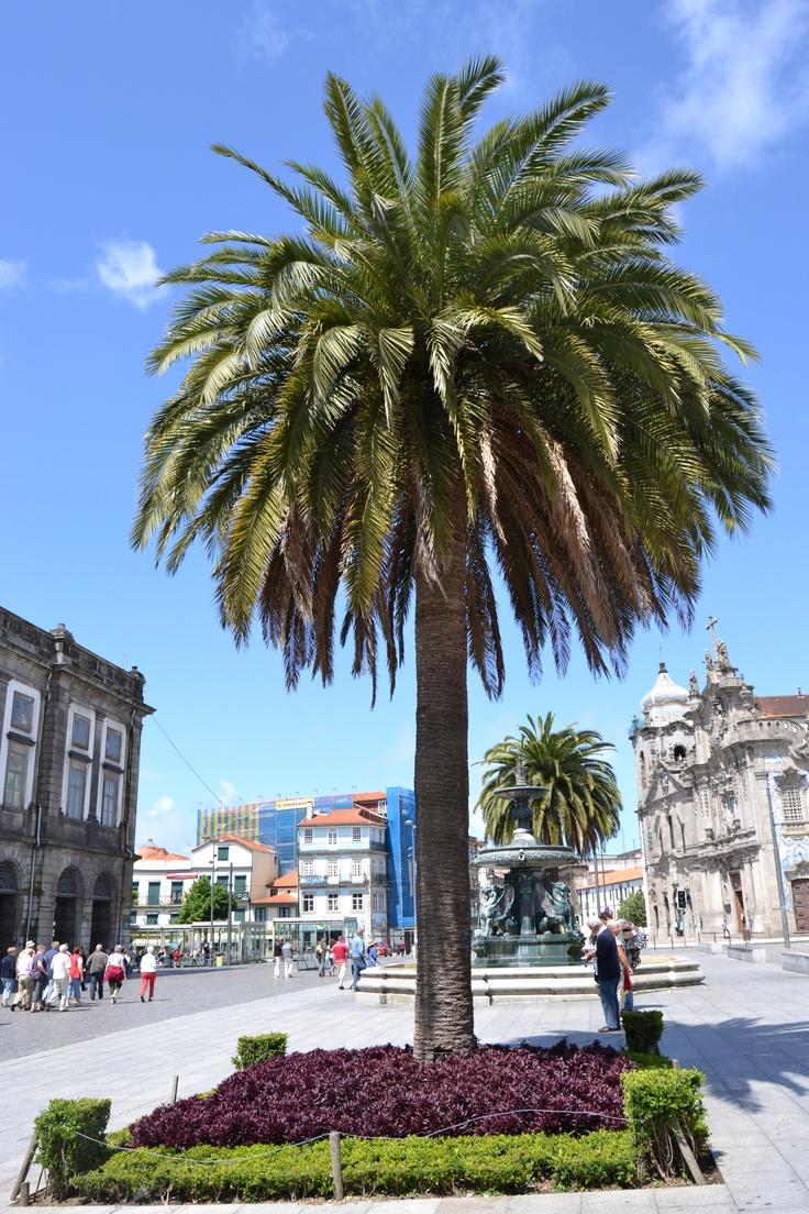 Praça dos Leões, Porto, Portugal.
