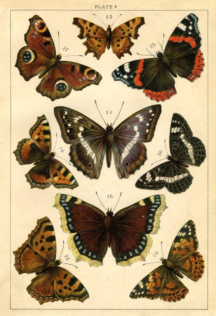 Instant Art Printable - Antique Butterflies and Moths