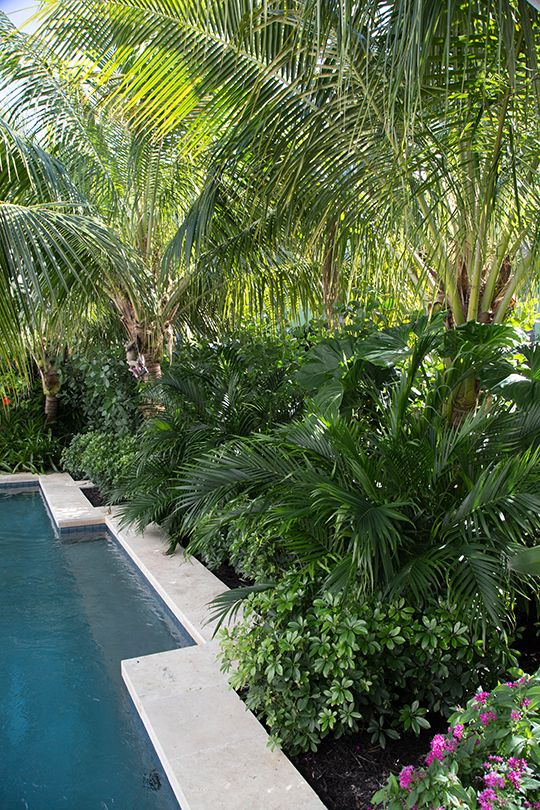 We are very excited to have been nominated by HGTV for their 2016 Ultimate Outdoor Awards in the Gorgeous Gardens' category - please stop by hgtv.com/outdoorawards & have a look at all of the beautiful entries! voting is from March 15th - April 4th.   This is a detail of a tropical landscape design/planting near swimming pool with a shelf & shaded area for the owners to relax during the hot summers here in Key West, Florida.