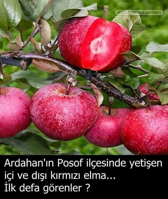 Elma.agacı..