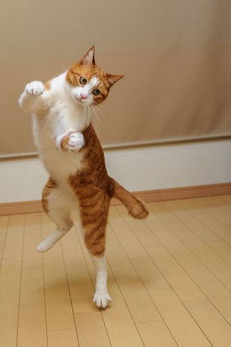 hokey pokey... ya put ur left foot in...left foot out...shake it all about...i dont remember the rest...